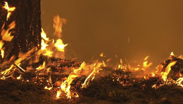 В российской Карелии бушуют лесные пожары - ввели режим ЧС