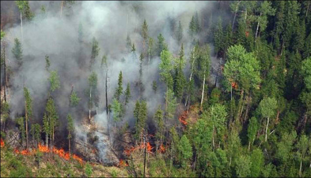 Россия в огне: на востоке страны горит около тысячи гектаров лесов
