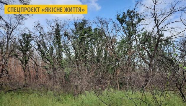 Згорів минулого року: на Луганщині самовідновлюється листяний ліс