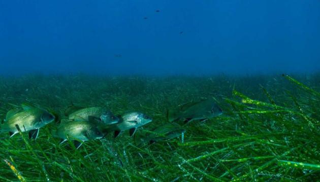 Морські водорості страждають від шуму, спричиненого людьми - учені