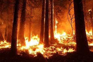 У Хорватії другу добу палають ліси – вигоріли вже 800 гектарів
