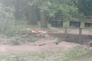 В Суботове на Черкасщине ураган повредил местную достопримечательность Три колодца
