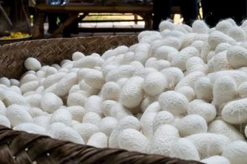 Ucrania iniciará la producción de seda con empresarios uzbecos