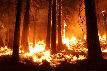В Хорватии вторые сутки горят леса - выгорело уже 800 гектаров