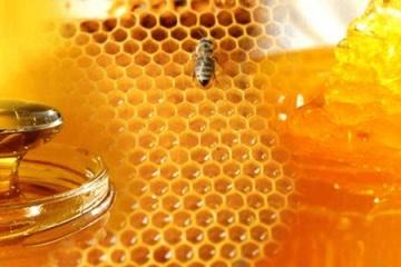 El cambio climático representa la principal amenaza para la apicultura en Ucrania