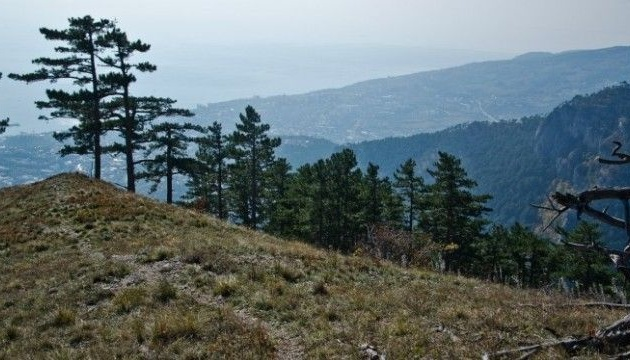 In occupied Crimea, 7,800 trees from Red List set to be felled during major highway construction