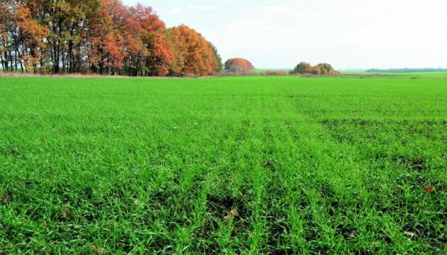 Agrarian Policy Ministry: 60% of projected area already sown with winter crops