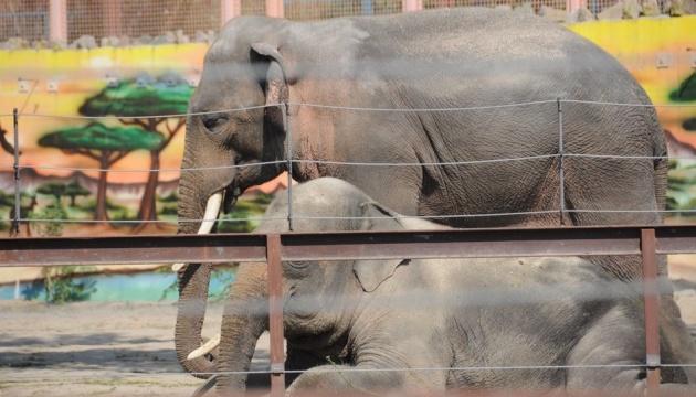 Слонов в Николаевском зоопарке поздравили с «профессиональным праздником»