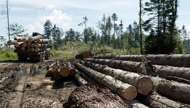 Продертися крізь «ліс», або Чи реально припинити злісну вирубку Карпат