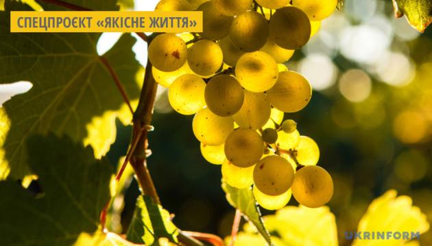 Виноград: корисні властивості