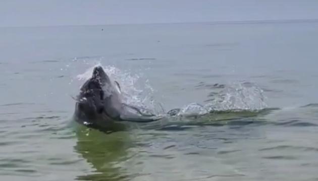 На Николаевщине дельфины устроили шоу рядом с людьми на пляже