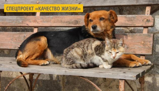 Ужгородский приют для животных «Барбос» начал акцию по сбору средств