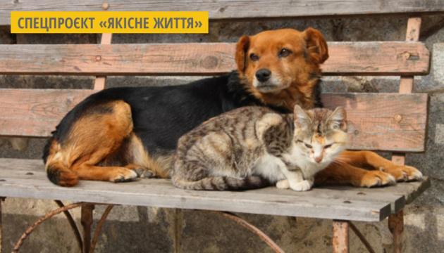 Ужгородський притулок для тварин «Барбос» розпочав акцію зі збору коштів