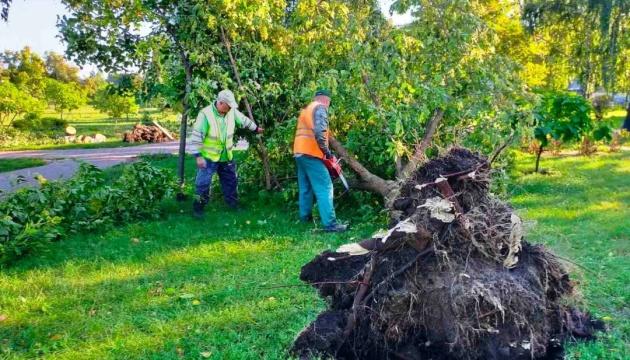 Стихія у столиці: вітер зламав понад 350 дерев