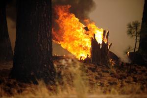 В Анталії - лісові пожежі, підозрюють навмисний підпал
