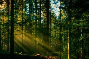Україна приєднується до Конвенції про Європейський інститут лісу