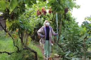 Эко-виноград: хороший урожай без химии
