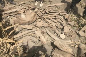 Турецкие археологи раскопали скелет слона, жившего тысячи лет назад