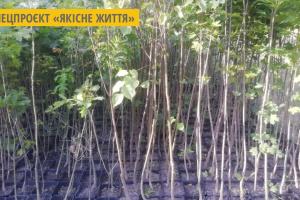 Киянам безкоштовно роздають саджанці дерев