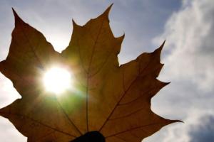 23 сентября: народный календарь и астровесник