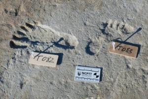 Ученые нашли в США человеческие следы, которым более 20 тысяч лет
