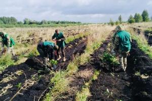 «Зелена країна»: на Волині висадили 1 мільйон сіянців дерев