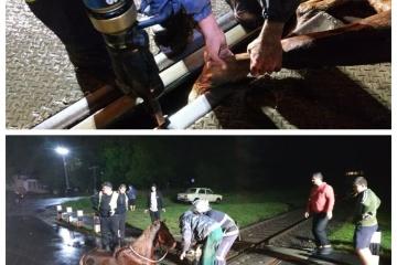 На Волині зупинили потяг через коня, який застряг на рейках
