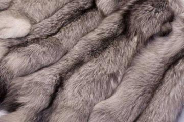 Les marques Saint Laurent et Brioni, renonceront à la fourrure à compter des collections de l'automne 2022