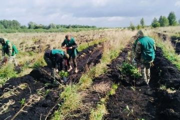 """""""Grünes Land"""": 1 Million Baumsetzlinge in Oblast Wolhynien eingepflanzt"""
