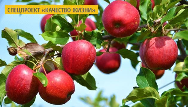 Новые сорта яблок и груш. Инфографика