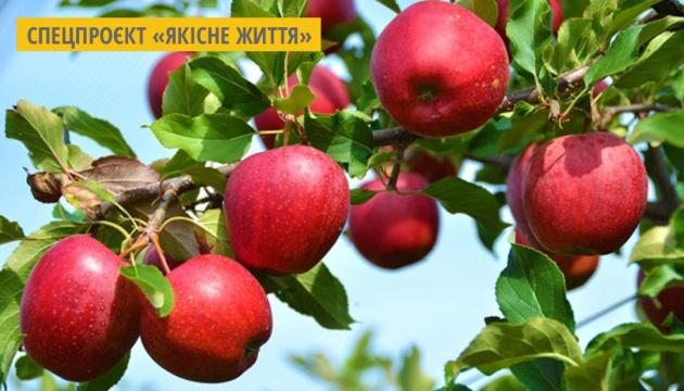 Нові сорти яблук і груш. Інфографіка