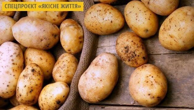 Фестиваль «Поліська пані Картопелька» відбудеться на Житомирщині