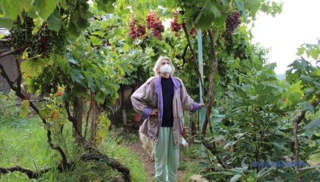 Ековиноград: добрий урожай без хімії