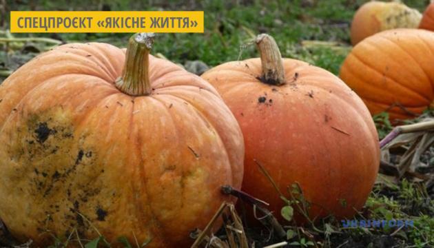 На Хмельниччині пройде фестиваль «Медовий гарбуз»