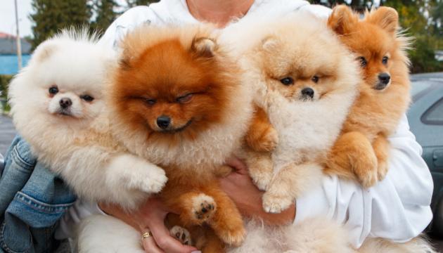 В Ужгороді провели міжнародну виставку собак