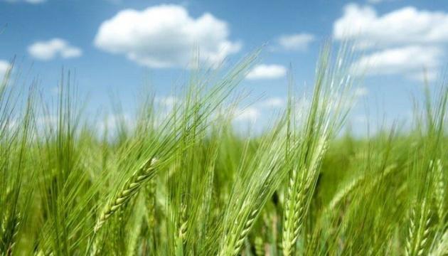 Всесвітній саміт з продовольчих систем: що може запропонувати Україна