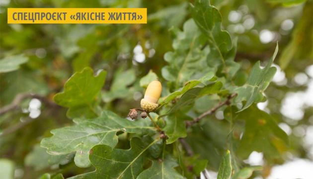 За рік черкаські лісівники висадили понад 1000 гектарів лісу