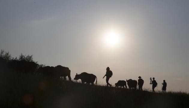 Un film sur les buffles rares des Carpates sortira sur grand écran en octobre
