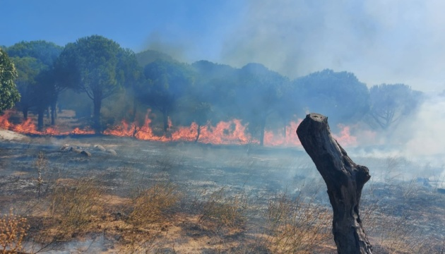 У Туреччині знову горять ліси