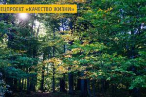 На Киевщине официально появился первый природный лес