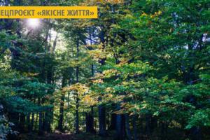 На Київщині офіційно з'явився перший природний ліс