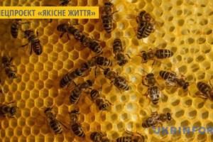 У Відні розводитимуть бджіл на даху складських приміщень