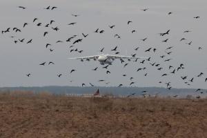 Самолет «Мрия» вернулся в Украину после выполнения коммерческих рейсов