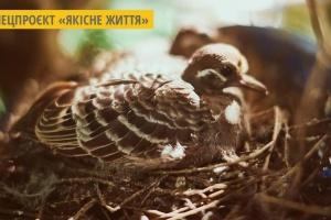 Возле Львова обустроили реабилитационный центр для птиц