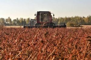 В Украине собрали рекордный урожай гречки