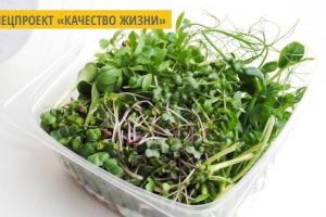 В Хмельницком на вертикальной ферме выращивают органическую микрозелень