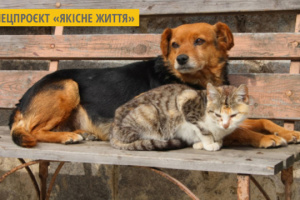 «З Ласкою в серці»: у Луцьку школярі  збирали корм та речі для безпритульних тварин
