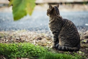 Тварини поряд: як ужитися з ними в міських «джунглях»