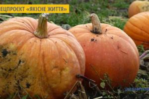 На Дніпропетровщині виготовляють цукати з гарбузів