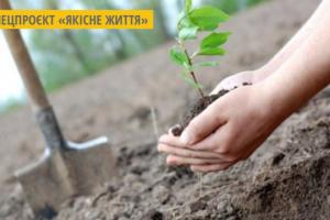 У дворах вінницьких багатоповерхівок висадять 800 дерев